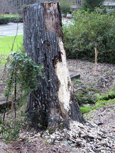 Gnome Tree Stump Home: In The Garden: Tree Stump Gnome Home