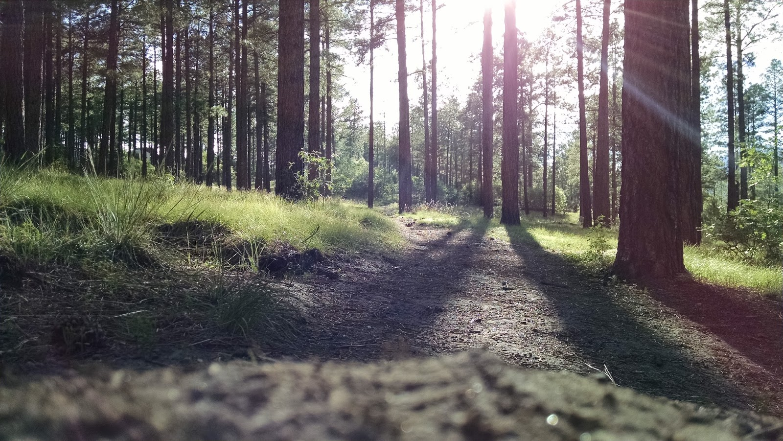Europa forstarker skogsbolagen