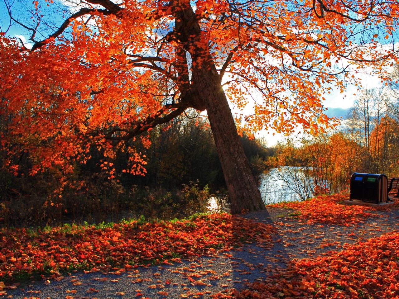 Solar For America >> Café, sonhos e pensamentos: E o outono finalmente chegou...