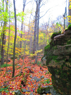 World's End State Park, Autumn, forest, rock