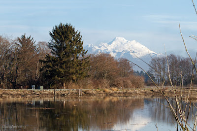 Mount Baker and the Skagit Wetlands