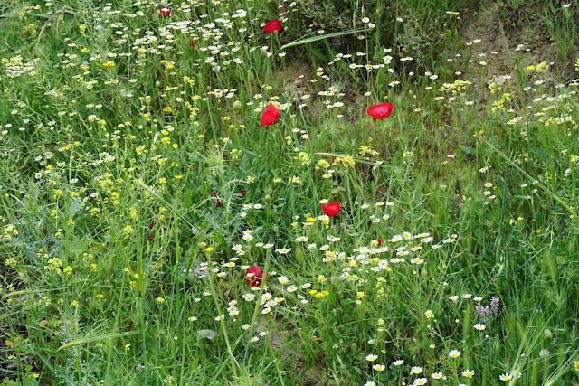 פרחים בשלל צבעים - עין עלווה