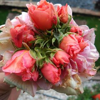 Una Rosa sen va aná y va dixá unes rosetes, cuidameles, Ramonet, al jardinet de Queretes.