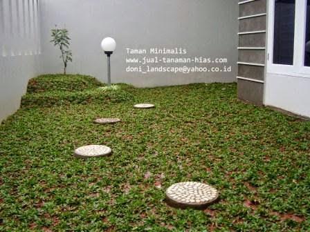 Rumput Gajah Mini | Rumput Golf | Rumput Jepang | Jasa Pembuatan Taman Murah
