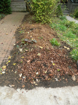 The Annex Front Garden Fall Clean up after by Paul Jung Gardening Services