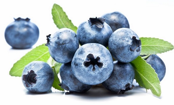 Bilberry OBAT HERBAL UNTUK SAKIT KENCING MANIS Diabetes