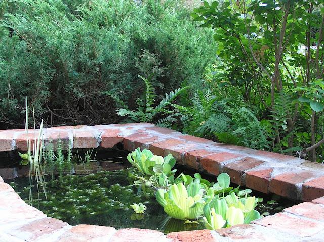 rośliny w małej sadzawce, oczko z cegły