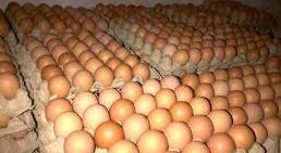 harga telur terbaru