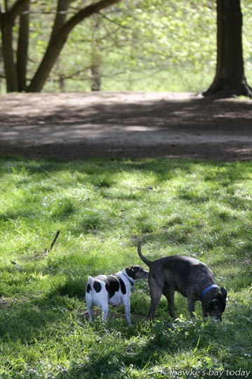Dogs enjoying the warm spring weather at Pakowhai Country Park, Pakowhai, Hastings. photograph