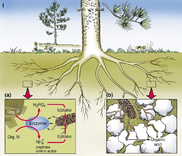 Phosphorous For Soil Natural Ways