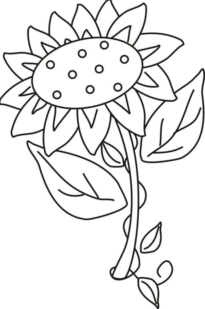 Gambar Mewarnai Gambar Bunga Matahari Untuk Anak