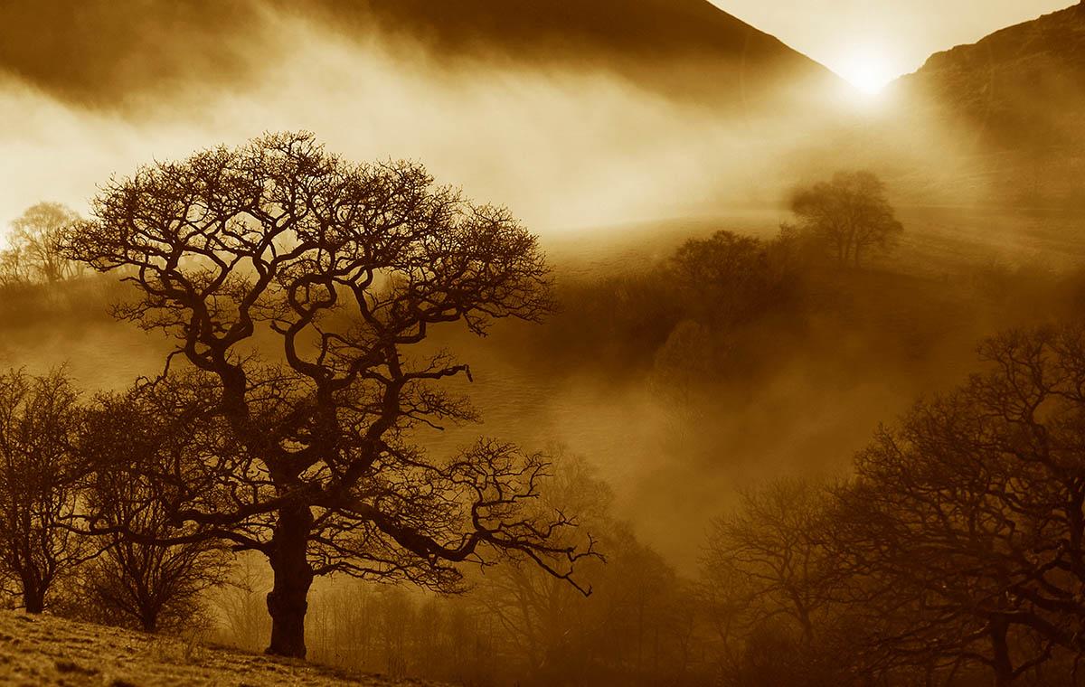 luz del sol ilumina el paisaje destacando la forma desnuda de un roble (Quercus)