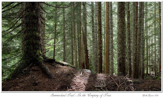 Summerland Trail: In the Company of Trees