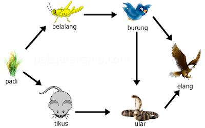 Komponen Biotik Secara Lengkap