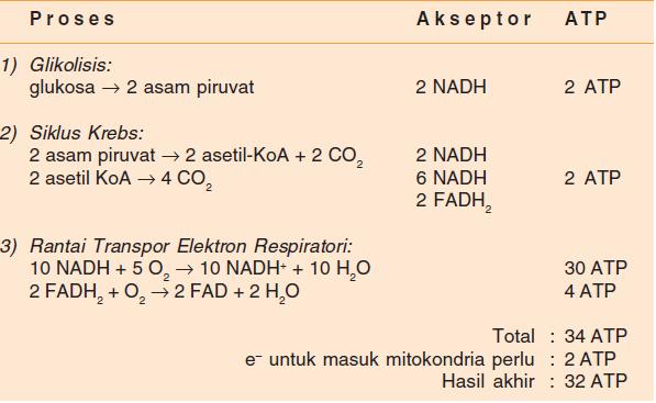 Respirasi, Pengertian Respirasi, Jenis-jenis Respirasi, Respirasi Aerob, Respirasi Anaerob, Respirasi Glikolisis, Respirasi Siklus Krebs, Respirasi Transpor Elektron.