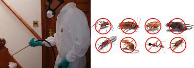 شركة مكافحة وإبادة الحشرات بالرياض