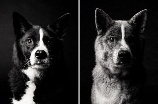 Fotos que mostram o envelhecimento dos cães
