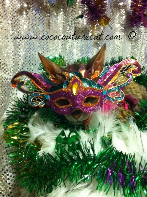 Coco the Cornish Rex cat in Mardi Gras mask