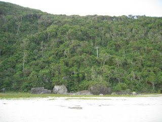 praia e floresta na Ilha do Mel
