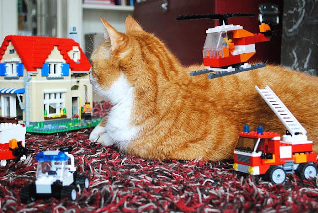 Een grote rode kater ligt rustig op de grond te midden van een Lego City huis, een lego brandweerwagen, politieauto, politiestation en een vliegende helicopter.