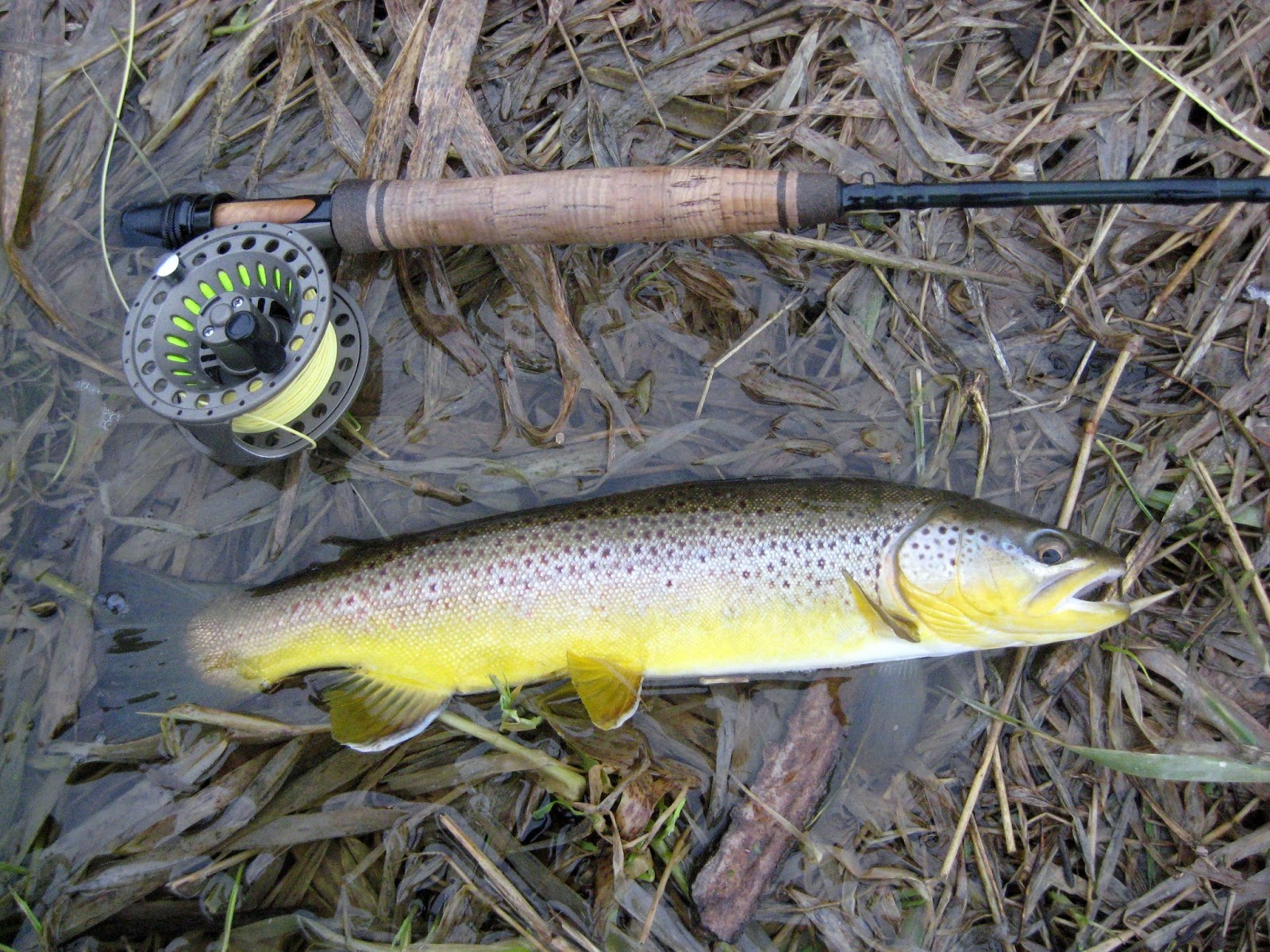 Minnesota driftless fly fishing trip report minnesota for Trout fishing mn