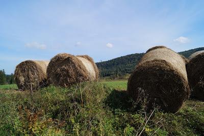 Bukowiec łąki