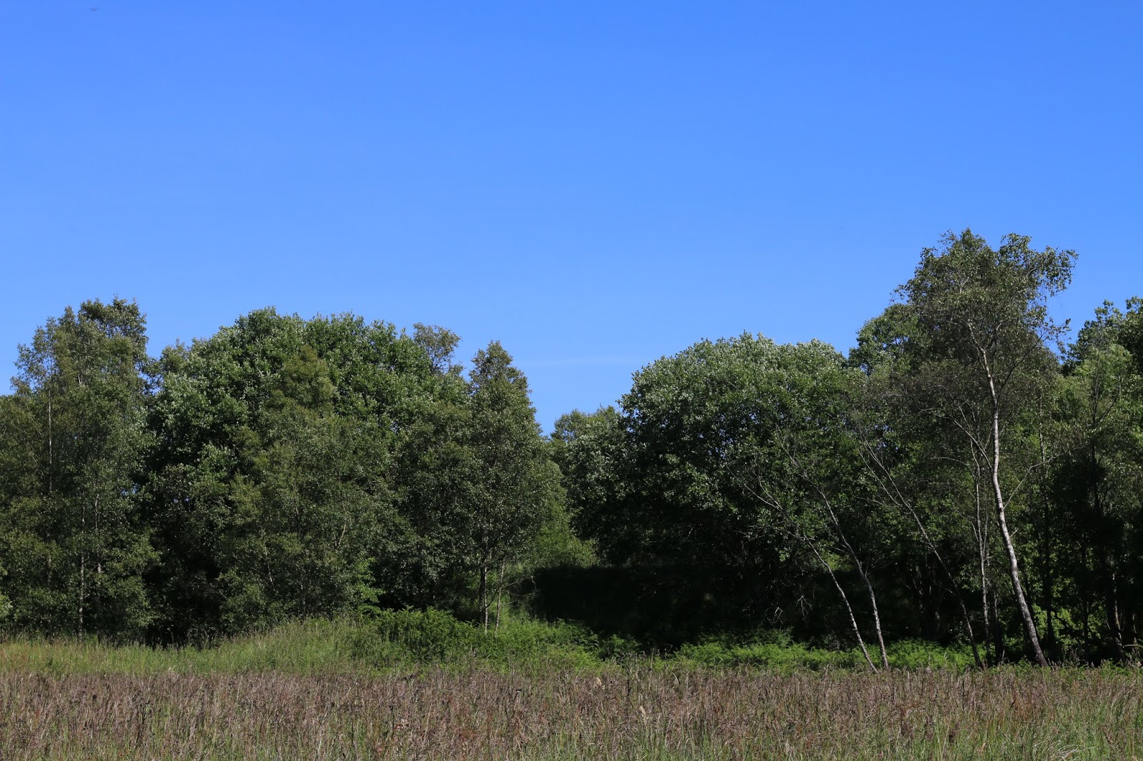 scenic view of trees against a clear blue sky