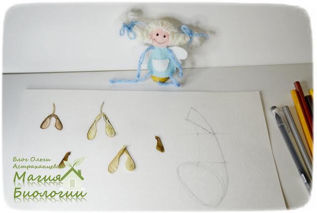 ботаническая-иллюстрация-дневник-наблюдений-крылатки-клена