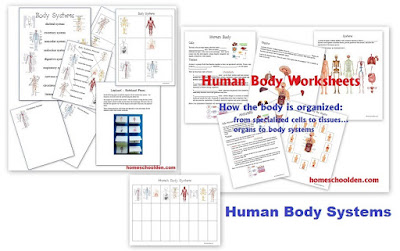 http://homeschoolden.com/2015/04/15/organization-of-the-human-body-cells-tissues-organs-systems/