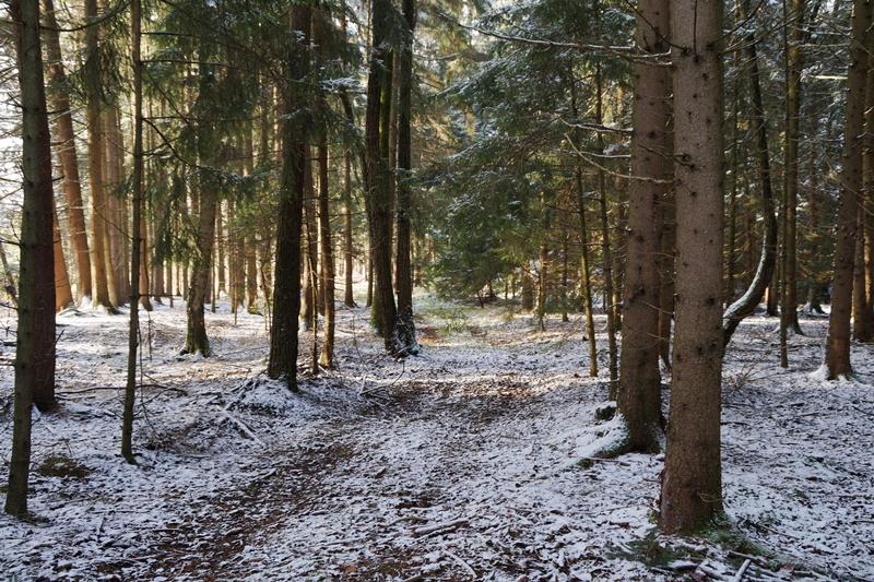 Winterwald Spaziergang im Schnee im Dezember. Tasteboykott Blog Favoriten.