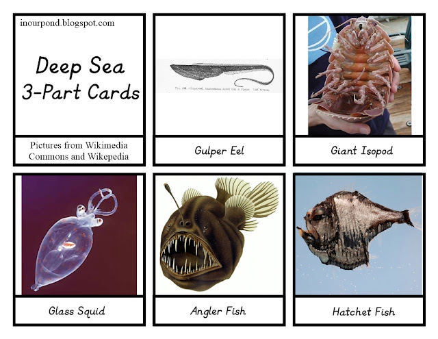 FREE 3-Part Cards for Safari Ltd Deep Sea Toob from In Our Pond