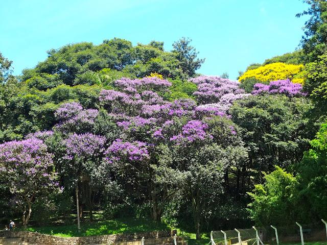 Parque São Domingos SP
