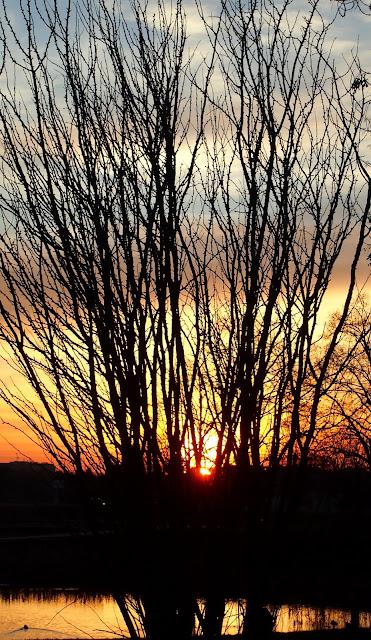 Krzak na tle zachodu słońca.