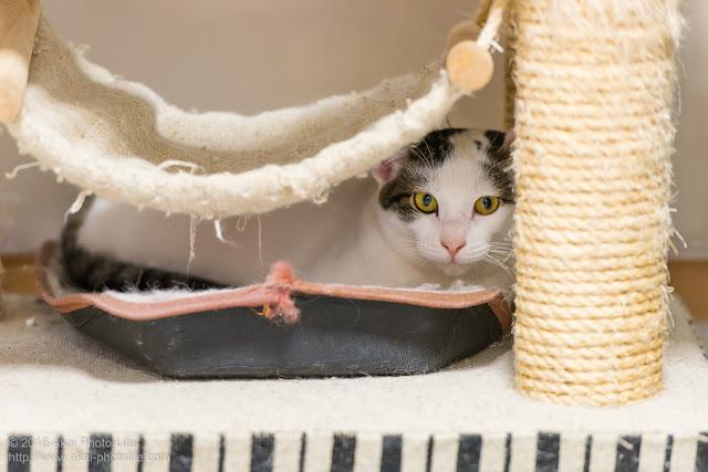 ハンモックの下に隠れて落ち着いた様子でカメラを見つめている猫の写真