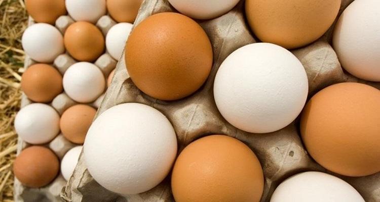 تعرف علي الفرق بين البيض الأحمر والبيض الأبيض
