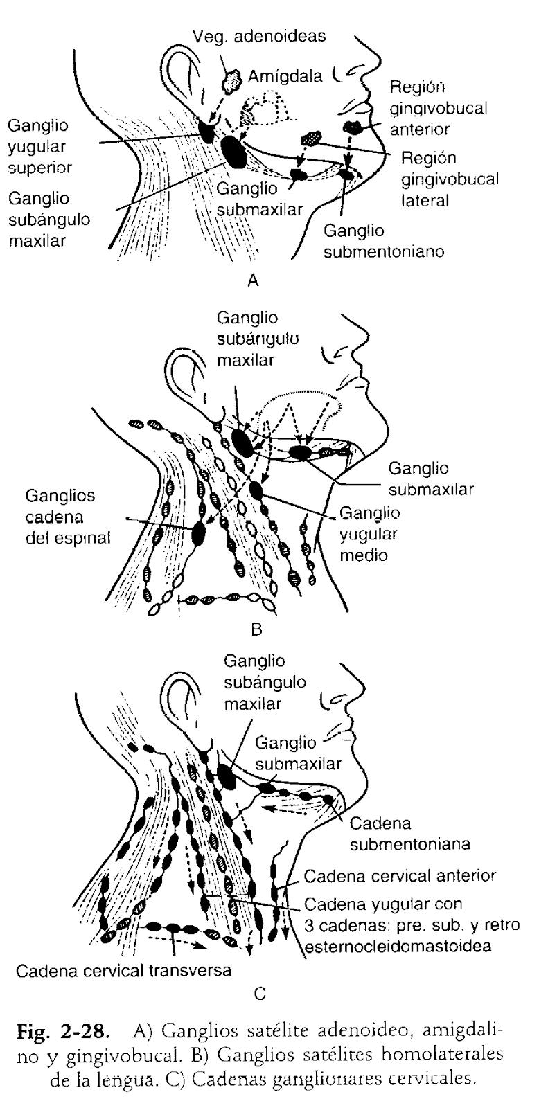 Palpación del Sistema Respiratorio (Semiología)