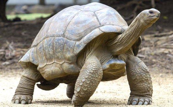 Estos animales se creían extintos pero volvieron a aparecer