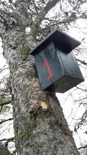 Cajas nido Gilena