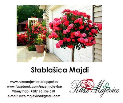 Ruže stablačice Majdi
