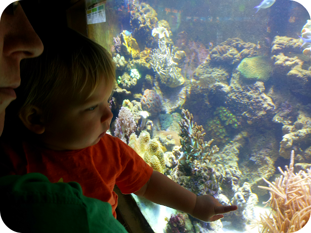 Barcelona aquarium, barcelona, toddler on holiday