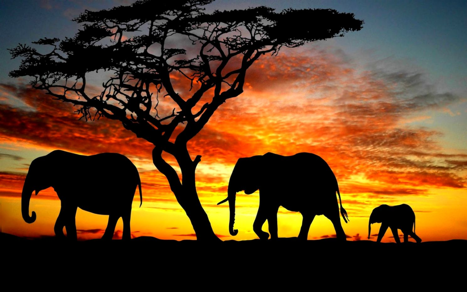 Elephant Hd Wallpaper Wallpapers History