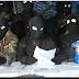 Το FLNC της Κορσικής απειλεί την Daesh.