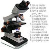 Cara Menggunakan Mikroskop Cahaya Dengan Benar