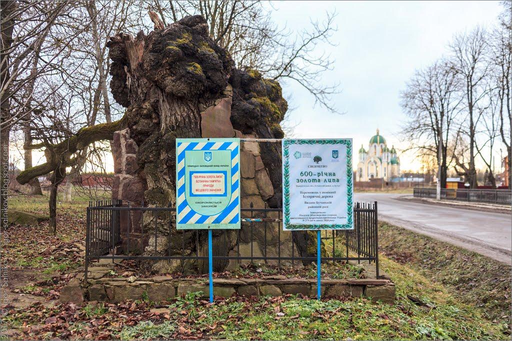 Бучач Тернополь область липа