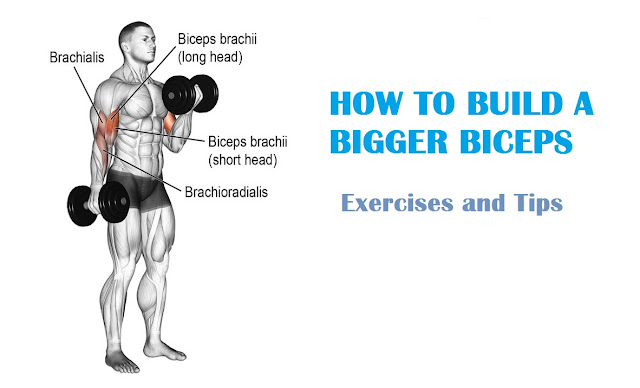 How to Build a Bigger Biceps
