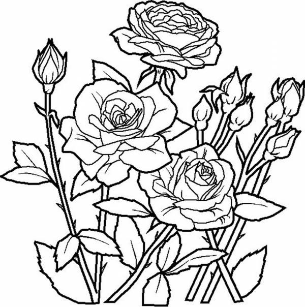 Melhores desenhos para colorir: Março 2017
