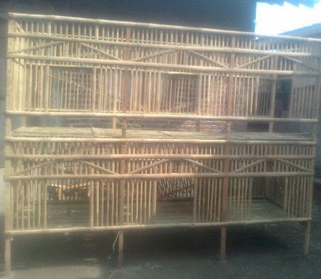 AYAM TERNAK_TRIYANA: Cara Membuat Kandang Ayam Bangkok ...