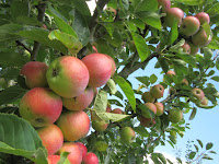 http://pridenstyle.blogspot.co.uk/2016/08/mottisfont-apple-orchard.html
