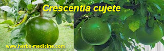 benefit Crescentia cujete for Hypertension