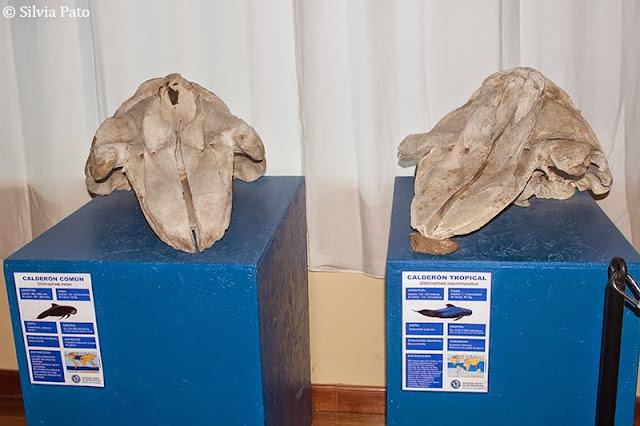 Calderón Sociedad Galega Historia Natural
